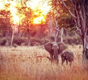 Zambia, Zimbabwe & Botswana Safari