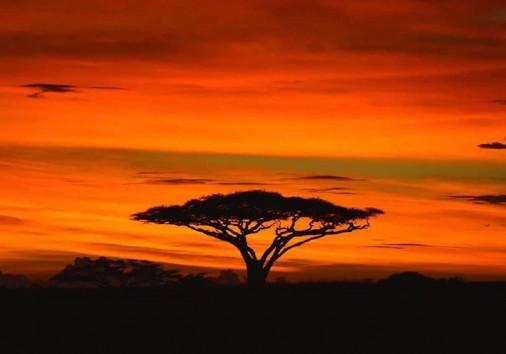 Sunset View Serengeti Copy