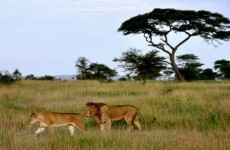 4-Day Ruaha National Park Wildlife Safari