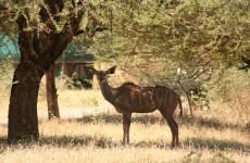 3-Day Mikumi National Park Lodge Safari