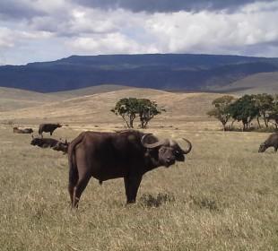 Tanzania National Parks Camping Safari