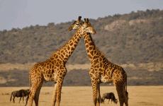 Taste of Tanzania Mid-Range Safari