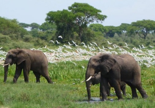 Murchison Falls National Park 750x450
