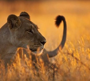 9-Day Tanzania Highlight Safari
