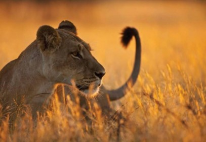 9-Day Tanzania Highlight Safari