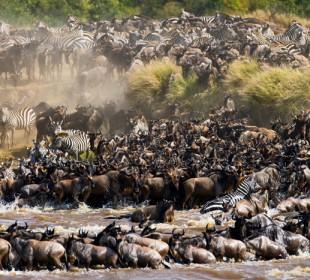 7-Day Serengeti Great Migration Safari