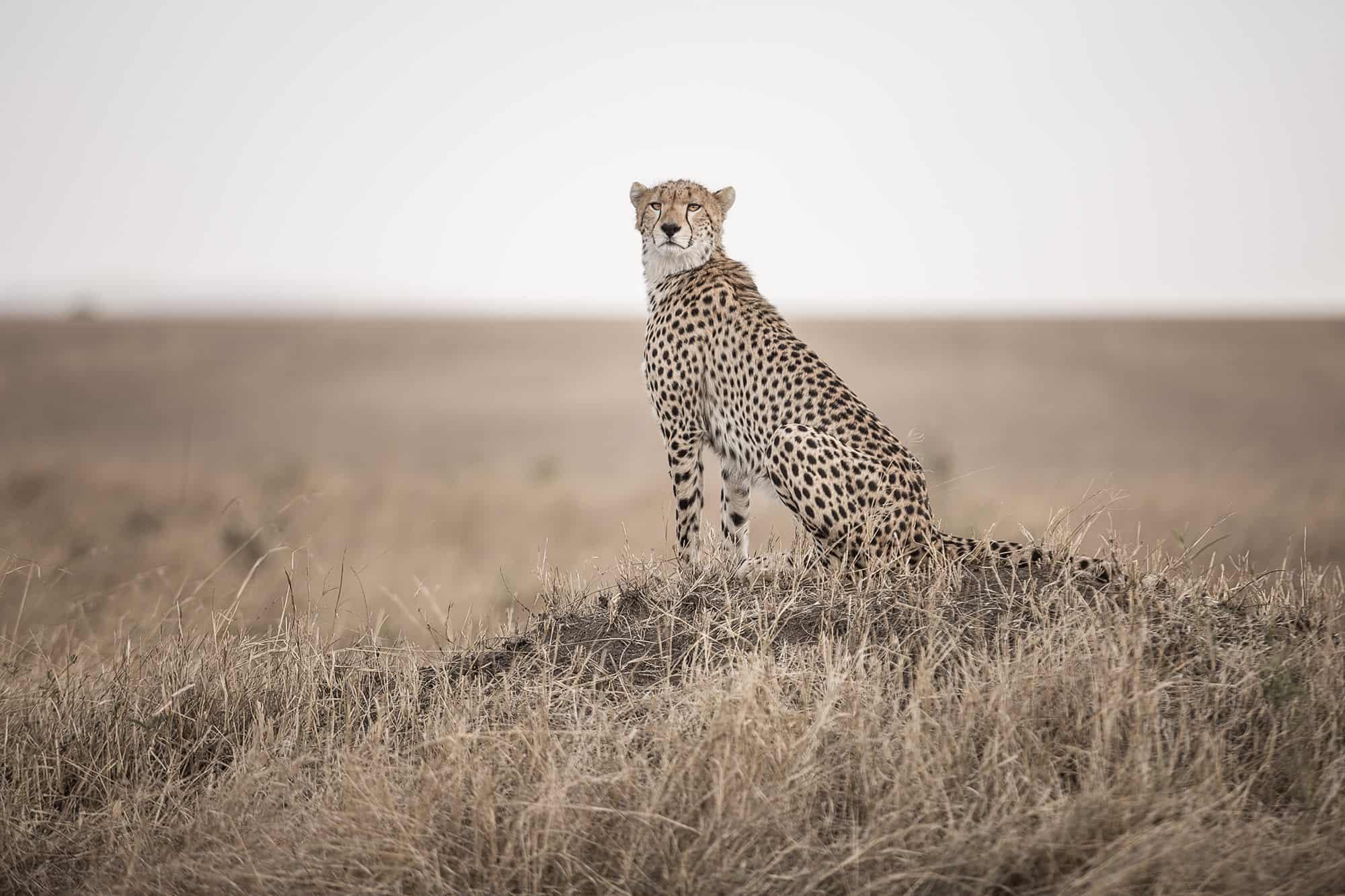 Photo~safari