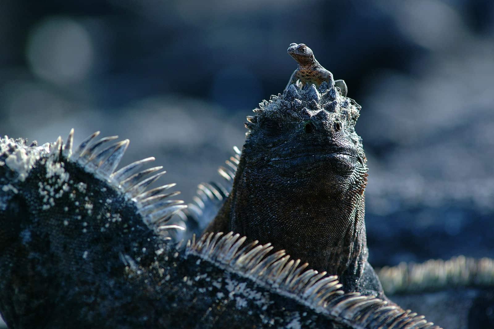 Ar Pn Galapagos Fauna 016.jpg