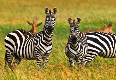 Serengeti to Zanzibar Safari