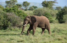 Thrilling Serengeti Wildlife Safari