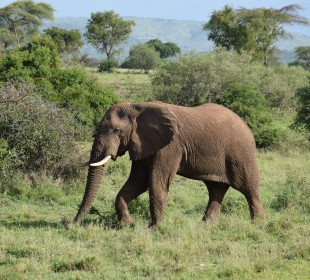 Thrilling Serengeti Wildlife Safari