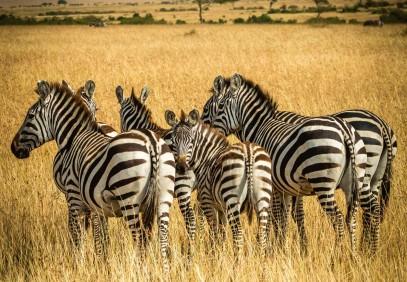 Tanzania  Lodge & Tented Safari