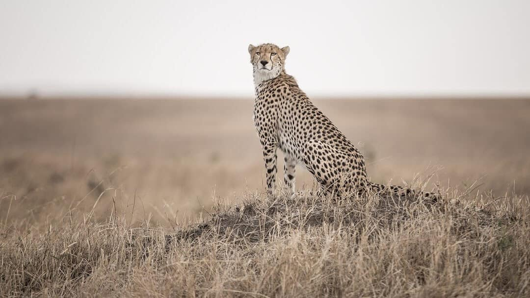 Expect In Africa Safaris Photo