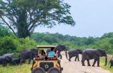 3-Day Wildlife Safari to Murchison Falls National Park