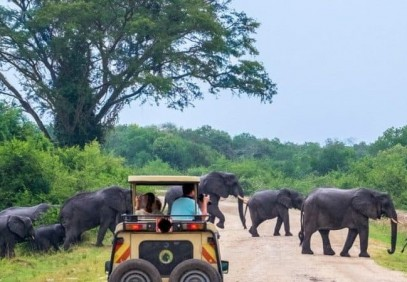 3-Day Wildlife Safari to Murchison Falls National Park