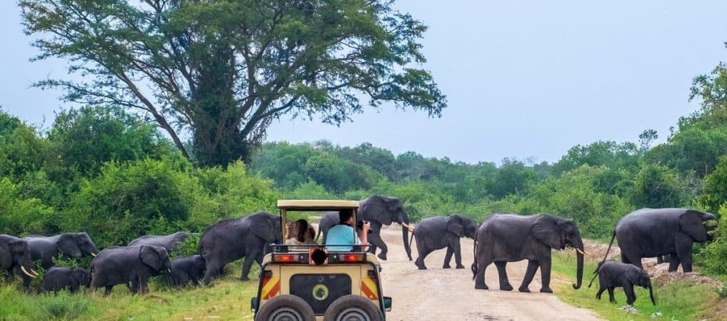 Game Drive In Murchison Falls National Park E1574844589456 1018x450 (1)