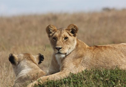 3-Day Masai Mara Big-Game Safari