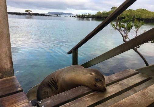 Galapagos Sea Lion Ba0432b4.jpg