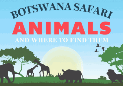 Botswana Safari Animals And Where To Find Them [Infographic]