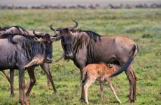11-Day Tanzania Photo Safari