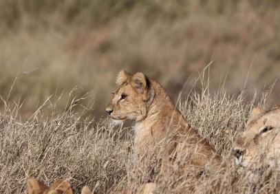 The Great Migration Photographic Safari