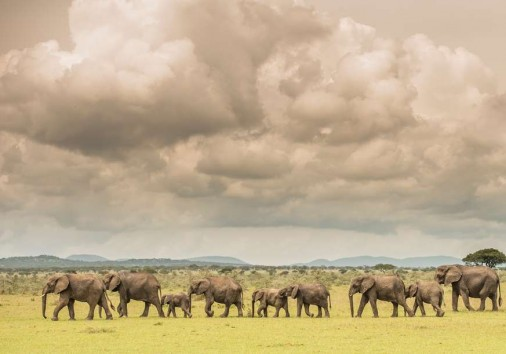 Safarigallery (3)