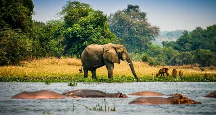Uganda Wildlife 750x400