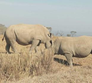 Masai Mara Budget Group Safari