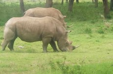 4-Day Maasai Mara Lake Nakuru Group Safari