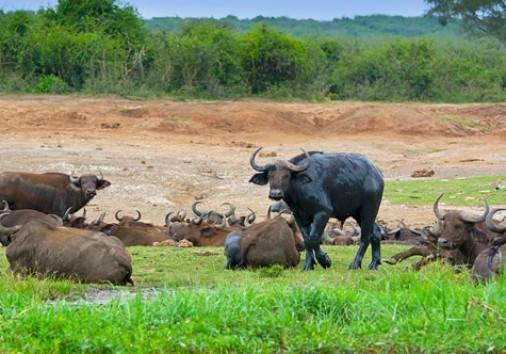 A Safari In Murchison Falls And Queen Elizabeth National Park