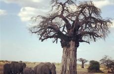 5-Day Tanzania Big Five Safari