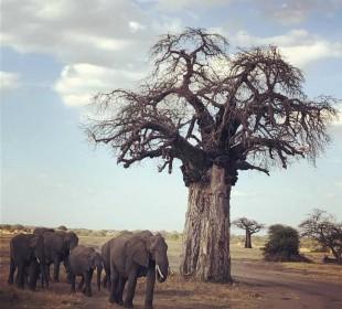 7-Day Tanzania Big Five Safari