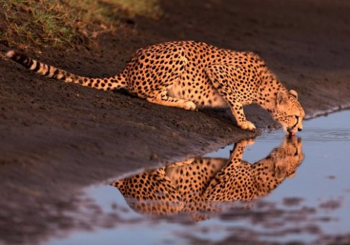 Cheater In Tanzania