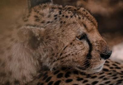 8-Day Tanzania National Parks Safari