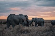 4-Day Striking Tanzania Wildlife Safari
