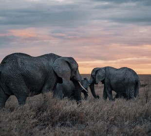 4-Day Striking Tanzania Wildlife Safari