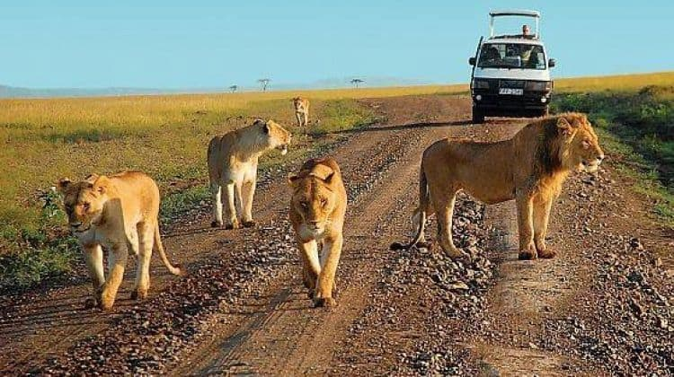 Game Drive In Murchison Falls Park
