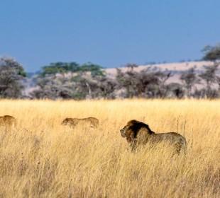 Amazing 4-Day Northern Safari Circuit