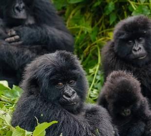 3-Day Ultimate Gorilla Safari in Bwindi National Park