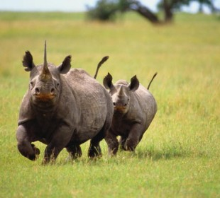 7-Day Tanzania Big Five Safari