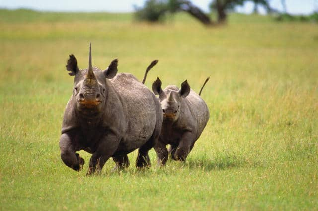 Ngorongoro Crater Rhino1