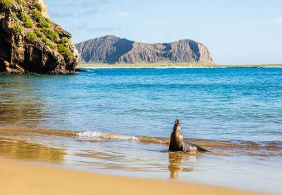 7 Days Galapagos Luxury Safari