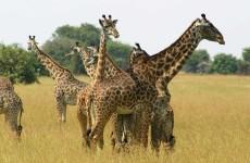 10-Day Luxury Fly-in Safari Tanzania