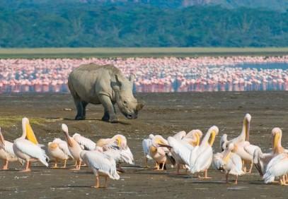 5 Days Amboseli, Lake Nakuru, Maasai Mara Safari