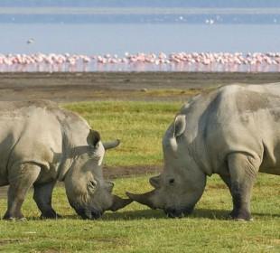 6-Day Tanzania Guided Camping Safari