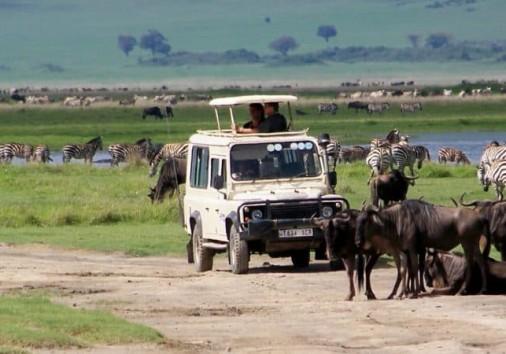 7 Days Serengeti Safari 750x450