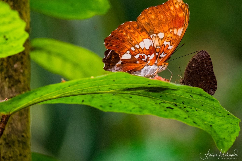 flora and fauna of Uganda @Amina Mohamed Photography