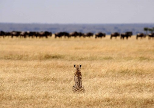 Exp Gallery Migration 0000 Tanz Serengeti Safari Camp 2