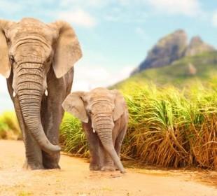 4 Days Tanzania Budget Group Safari