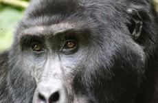 7 Days Rwanda Primates Tour